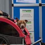 Tag des Hundes: Impressionen